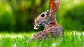 Wielkanoc i Majówka – tymczasowe zmiany harmonogramów